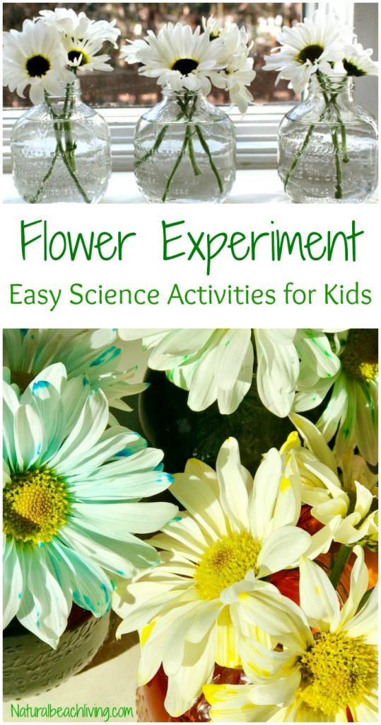 Easy Flower Science Activities For Preschool And Kindergarten