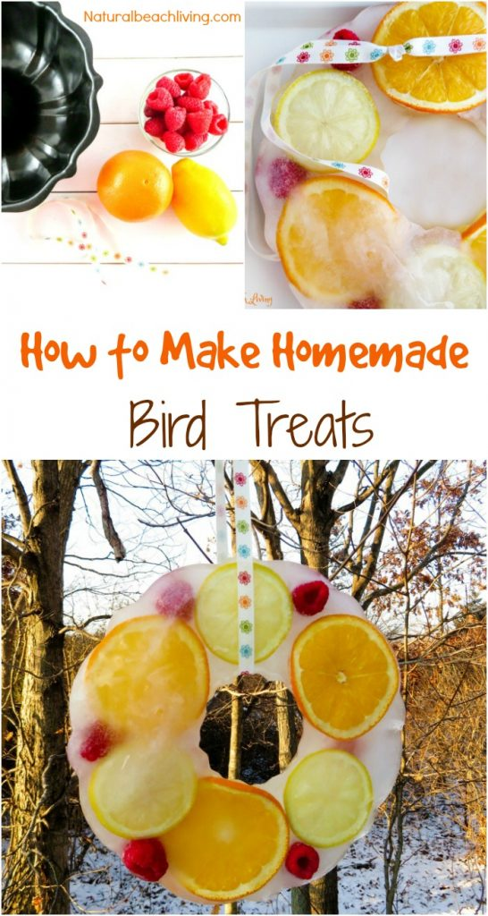 How to Make Beautiful Icy Homemade Bird Treats, Lovely DIY bird treat ornaments, These Easy bird treats will bring everyone joy, perfect nature activity