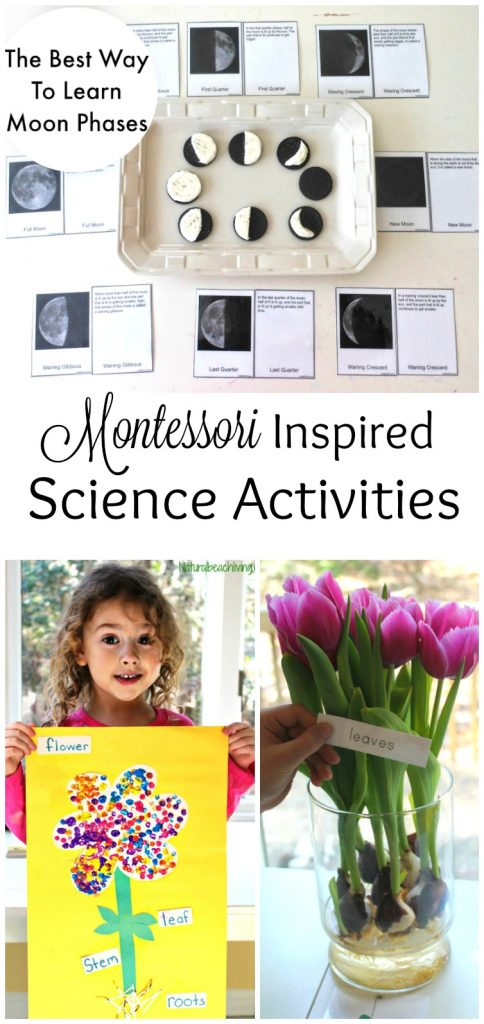 Preschool Montessori Science, Montessori Science activities for preschoolers, Hands on activities for kids, Astronomy, Botany, Zoology, STEM, and so much more