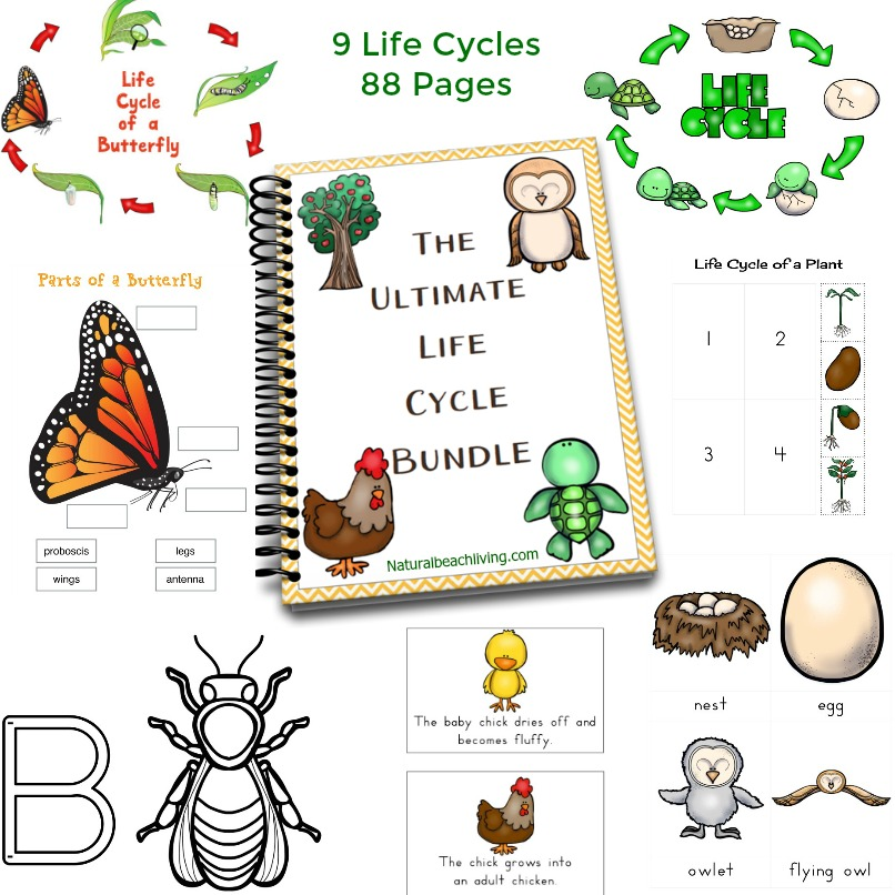 Life Cycle Printables Bundle