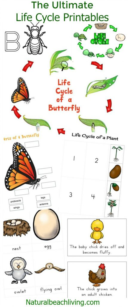 The Ultimate Life Cycle Printables - Natural Beach Living