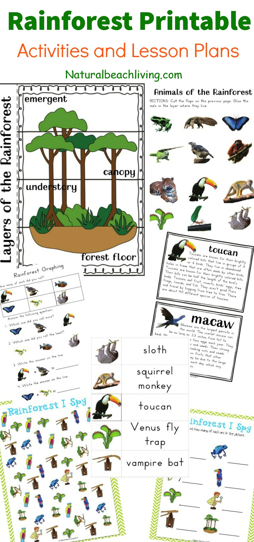 the best rainforest printable activities perfect for a rainforest theme unit study kids activities