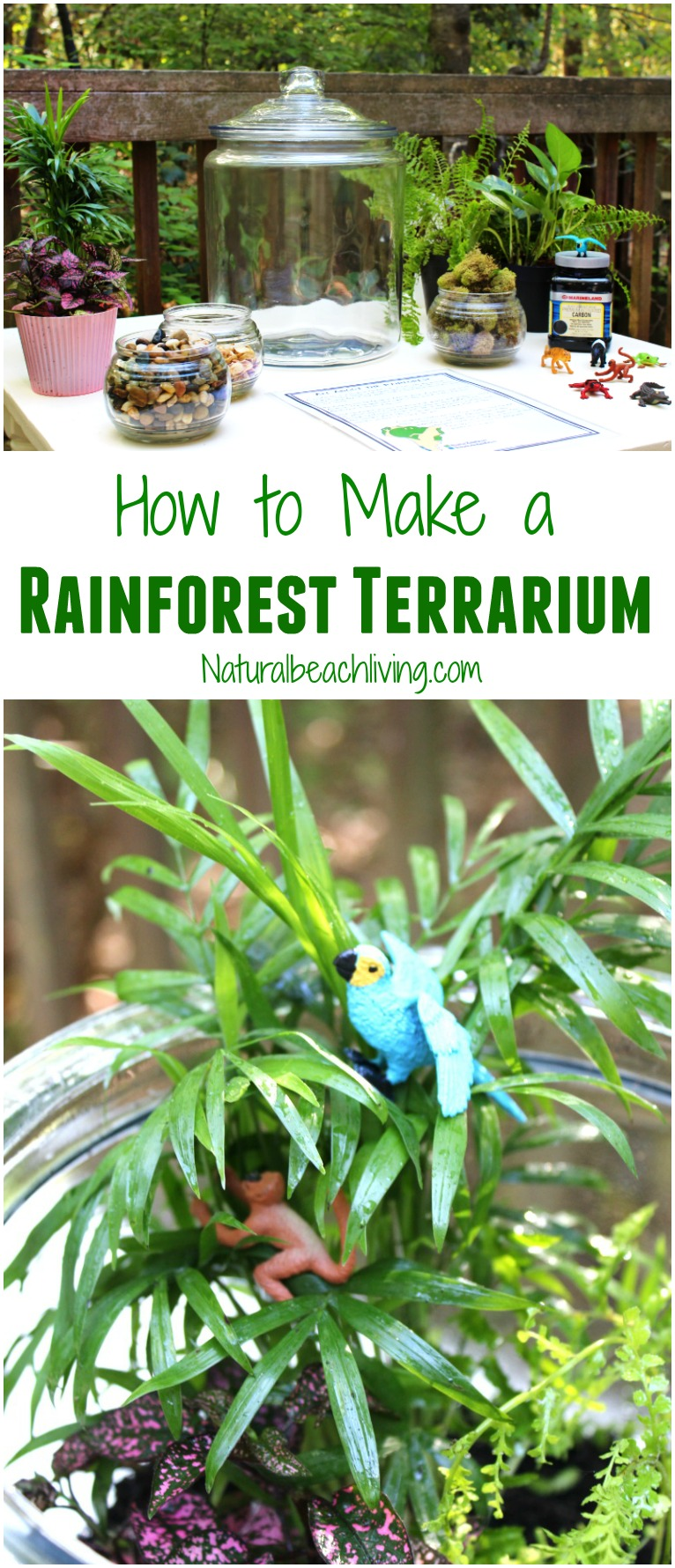 How To Make The Best Rainforest Terrarium With Kids, Learn About The  Rainforest Animal Habitat