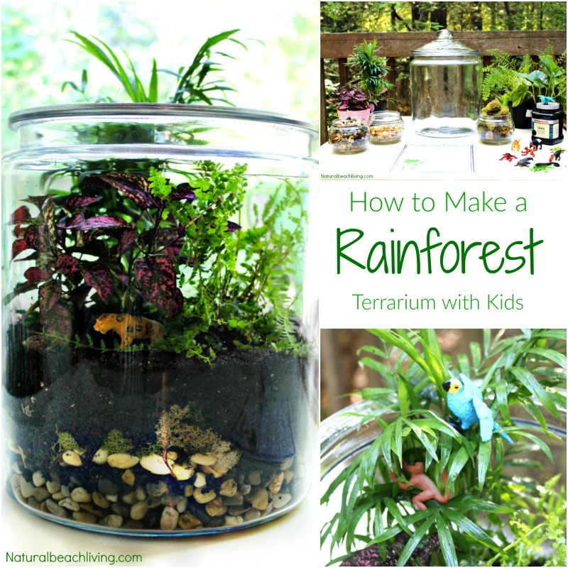 How to Make a Rainforest Terrarium with Kids