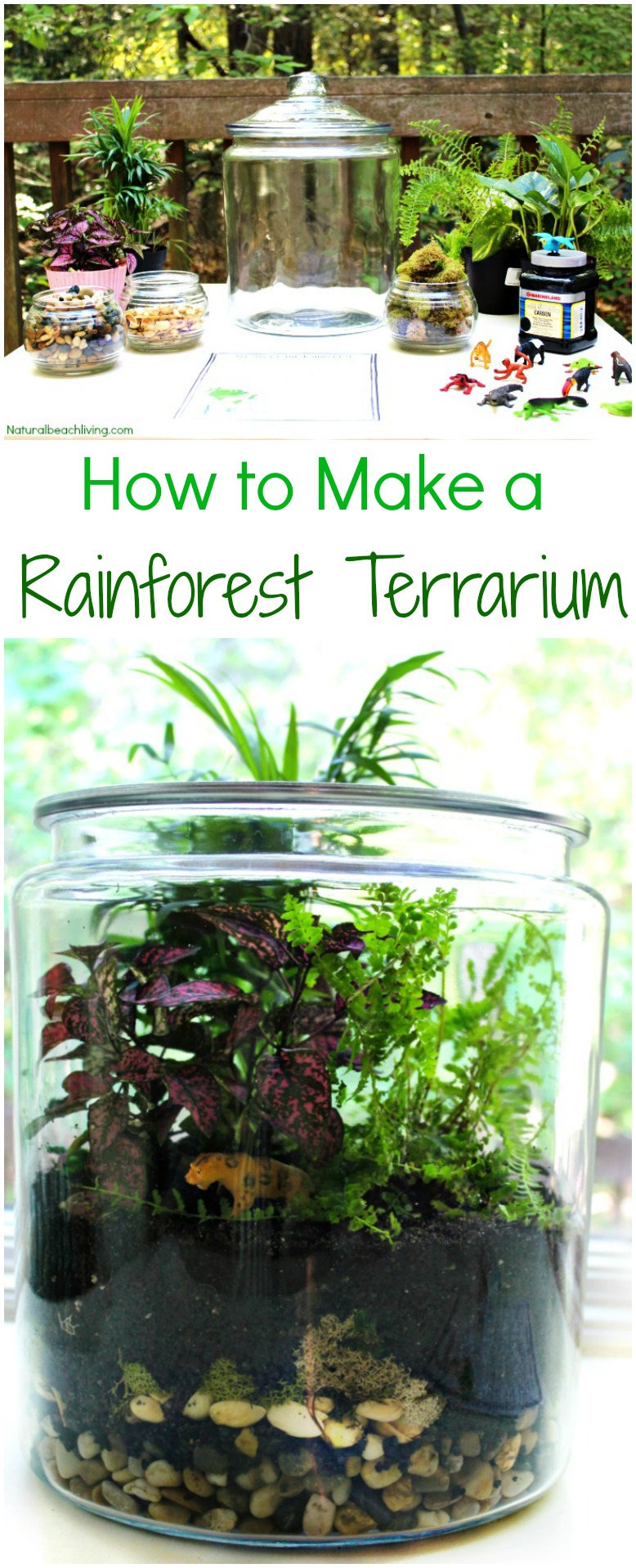 How to Make The Best Rainforest Terrarium with Kids, Learn about the Rainforest Animal Habitat, ecosystem, Water Cycle, Amazing Hands-on activity for kids