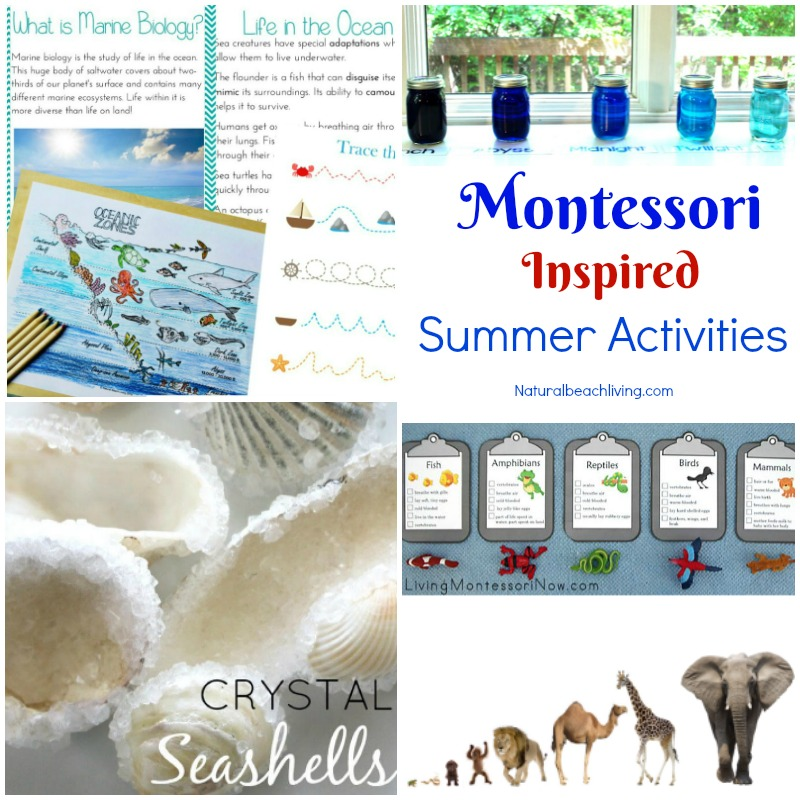 12+ Montessori June Preschool Themes Perfect for Summer