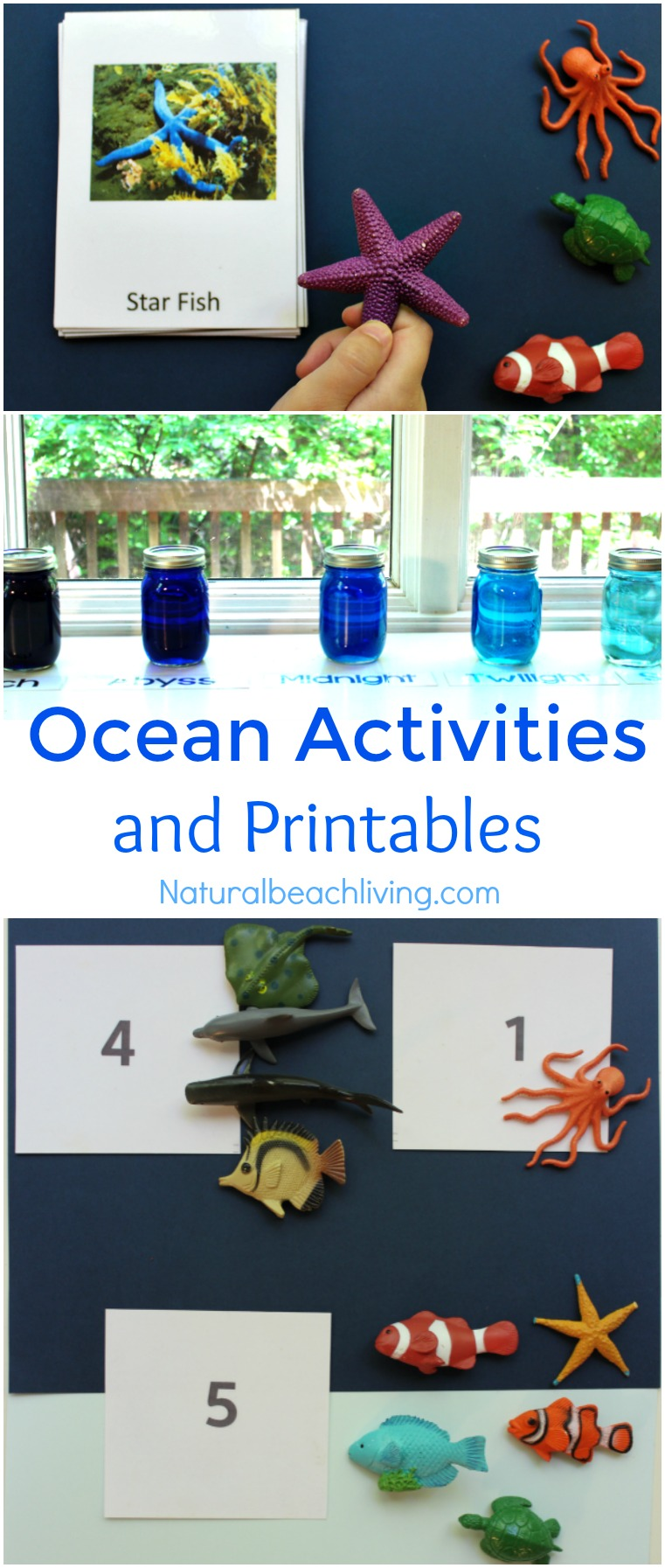 Montessori June Preschool Themes, Activities and Printables, Ocean, Under the Sea, Zoo Themes, Strawberries, Summer, Sea Shells, Science and so much more.