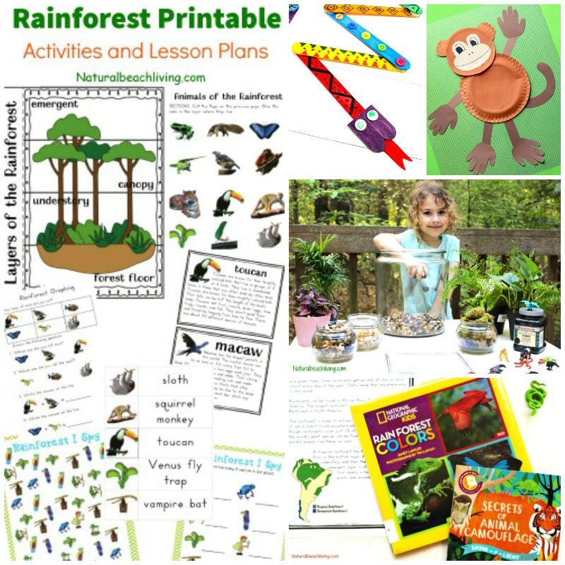 The Ultimate Rainforest Activities Kids Theme, Awesome Unit Study, Rainforest crafts, Rainforest printables, DIY Terrarium, learn animal habitats & More