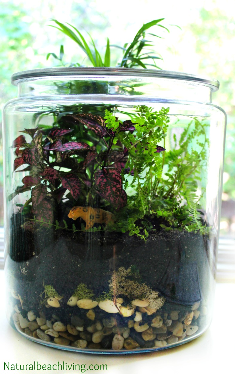 How To Make A Rainforest Terrarium With Kids Natural