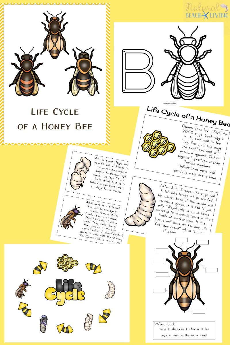 How to Make a Mason Bee Habitat - Perfect Life Cycle of a ... - photo#16