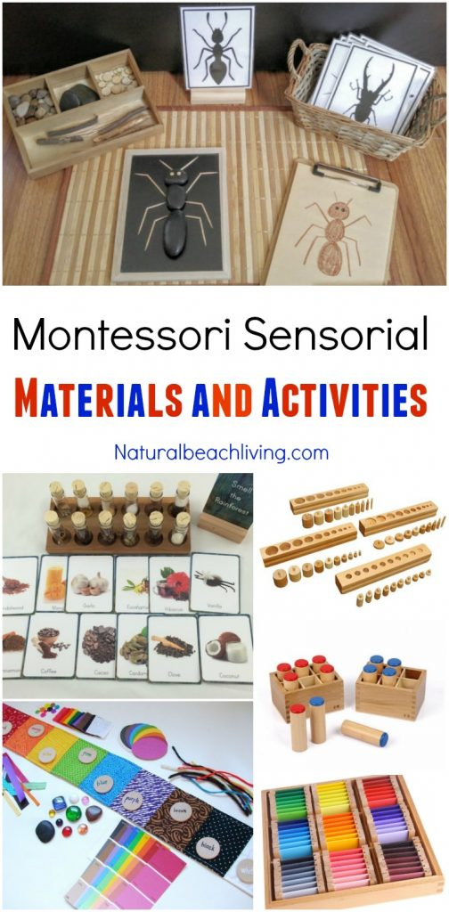 30+ Amazing Montessori Fall Activities for Preschool and Kindergarten, Montessori Sensorial, Montessori Books, Montessori Printables, Montessori Themes