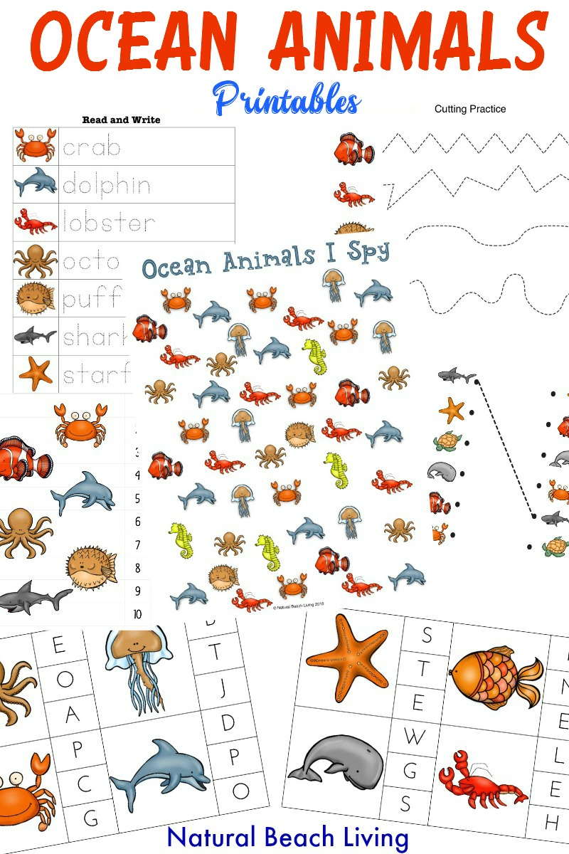Ocean Animals Worksheets : The best ocean animals preschool activities and printables