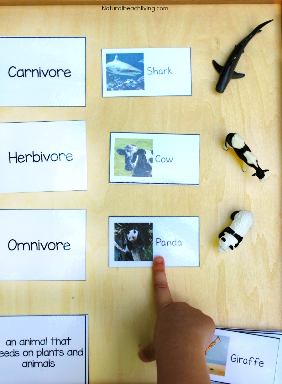 worksheet Herbivore Carnivore Omnivore Worksheet montessori science for kids animal sort activity and printables food chain hands on activities