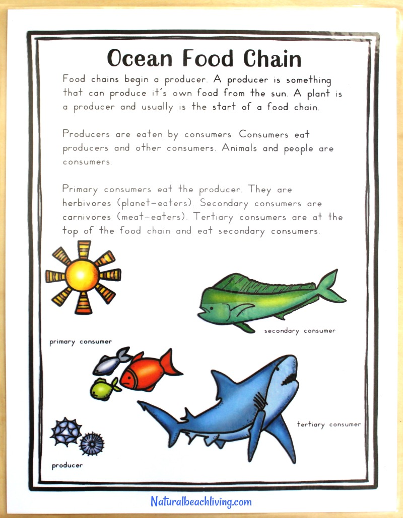 The Best Shark Printable Activities for Kids - Natural Beach Living
