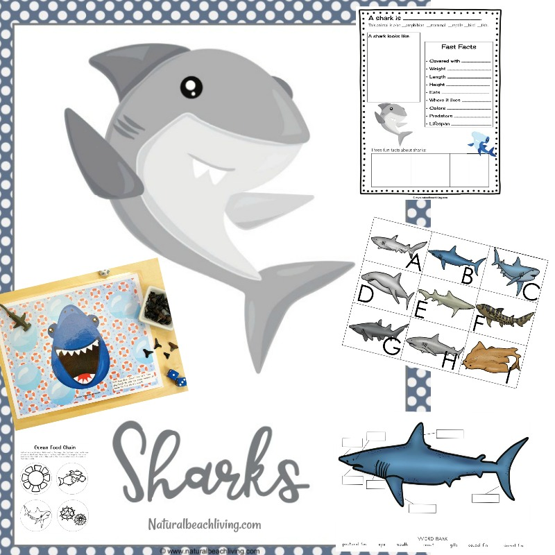Shark Printable Activities - Natural Beach Living