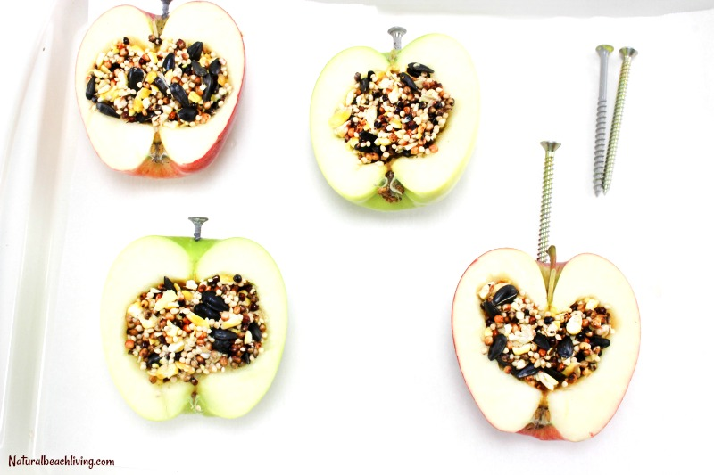 How to Make Apple Birdseed Homemade Bird Feeders, Apple Bird Feeders, Easy Homemade Bird Feeders, DIY Bird Feeders, Bird Feeders for Kids to Make, Great Fall Craft for Kids, Homemade Bird Treats, Birdseed ornaments, Homemade Bird Seed Ornaments How to Make bird seed ornaments, DIY birdseed ornaments, Birdseed ornament recipe, Apple Activities for Kids, #birdseedornaments #Birdtreats #homemadebirdfeeders #birds #bird #natureactivities