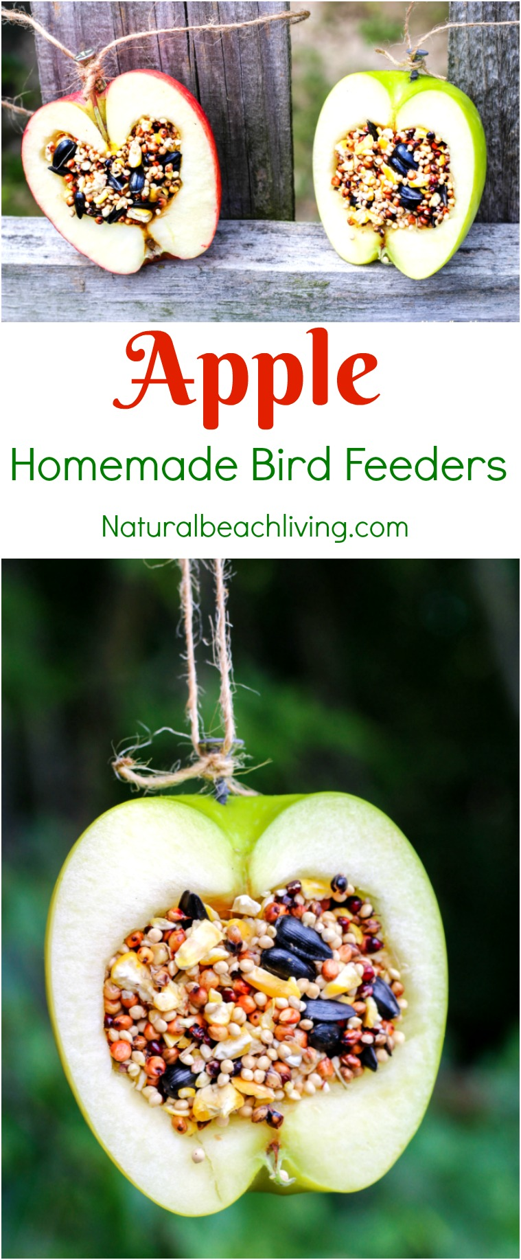 How To Make Apple Birdseed Homemade Bird Feeders Everyone