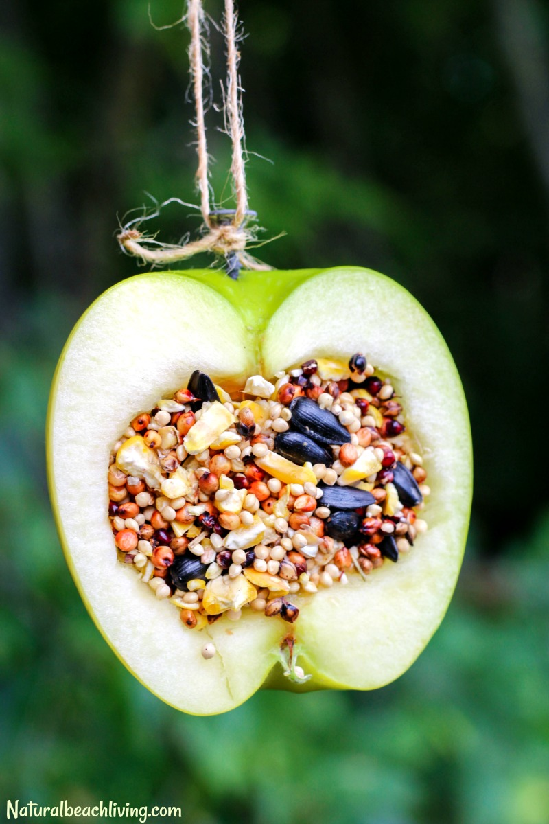 How to Make Apple Birdseed Homemade Bird Feeders Everyone Loves - Natural Beach Living