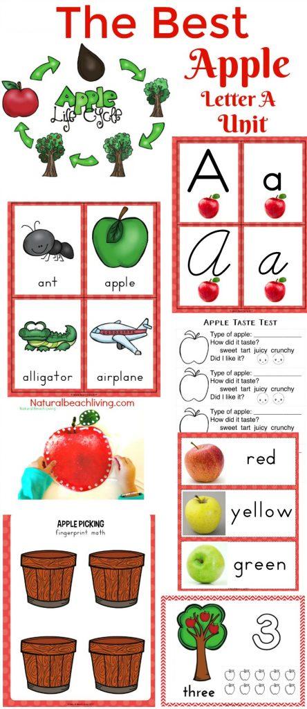 The Best Kindergarten and Preschool Apple Theme Unit, Fall Preschool themes, Preschool Lesson Plans Apples, Apple Activities Preschool, Apple Art, STEM,