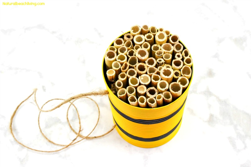 How to Make a Mason Bee Habitat, Perfect Life Cycle of a Bee Activities, Bee Theme, Hands on activities, DIY Bee Homes, Honey Bee life cycle, Bee unit Study