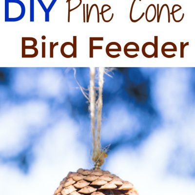 How to Make The Best Pine Cone Bird Feeder