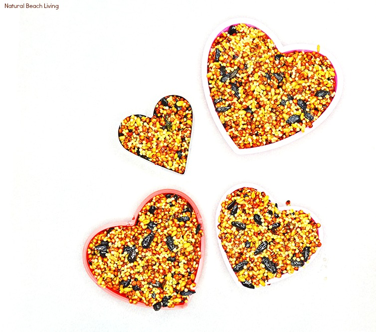 Easy Homemade Bird Seed Ornaments Recipe, These DIY Birdseed Ornaments are a perfect nature project to do with kids, bird seed ornaments with gelatin, Backyard Birds love Homemade Bird Seed Ornaments, how to make edible bird seed ornaments, Bird Treat Craft, Valentine Cookie Cutter Bird Seed Ornament, #Bird #birdfeeder #birdseedornaments #natureactivities
