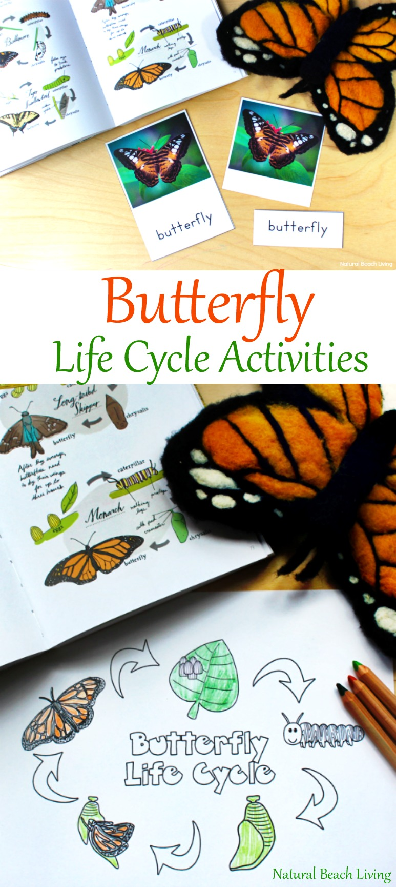 The Best Butterfly Life Cycle Activities for Kids - Natural Beach Living