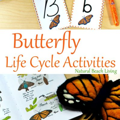 The Best Butterfly Life Cycle Activities for Kids