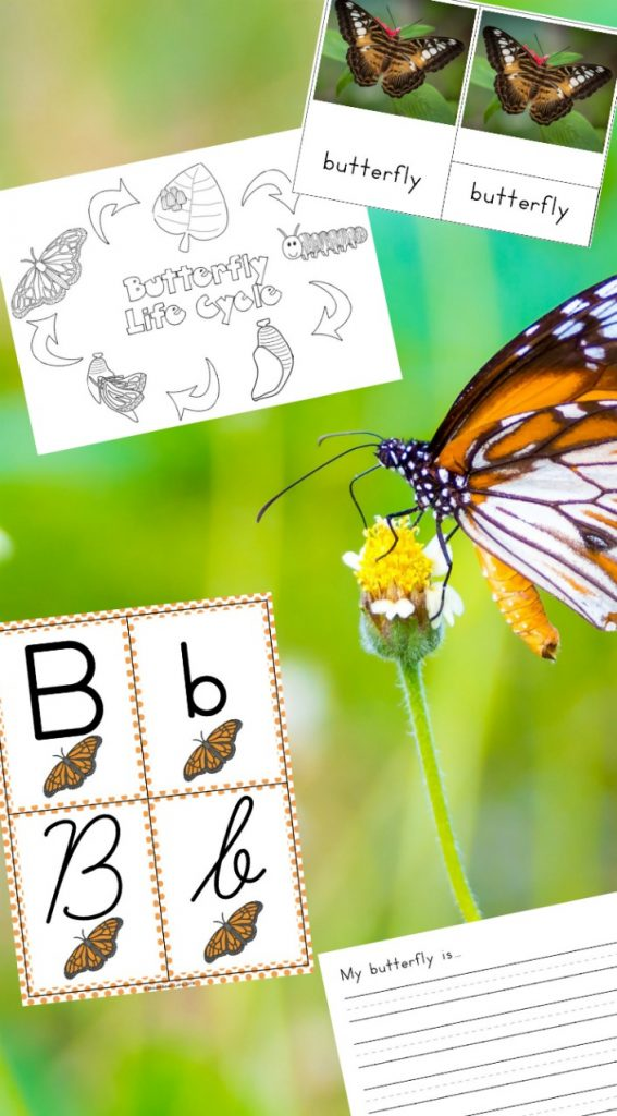 The Best Butterfly Life Cycle Activities for Kids, teach your kids about the butterfly life cycle in a fun, educational way. Plus add in hands-on activities, butterfly life cycle crafts, and free life cycle printables. Butterfly Life Cycle Activities Science, Butterfly Life Cycle Lesson Plans, Life Cycle of a Butterfly Activities for Preschool, Life Cycle of a Butterfly Activities for Kindergarten, First Grade, Second Grade, Natural Science and Literacy for Kids