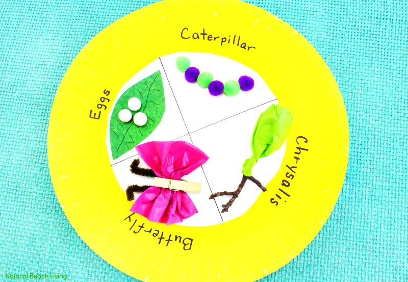 Easy Butterfly Life Cycle Paper Plate Craft life cycle of a butterfly activities butterfly & Easy Butterfly Life Cycle Craft Kids Love - Paper Plate Craft ...