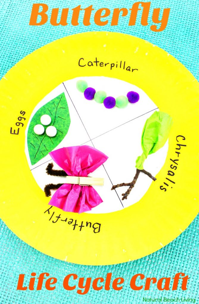 Easy Butterfly Life Cycle Paper Plate Craft, life cycle of a butterfly activities, butterfly life cycle craft for kindergarten, life cycle of a butterfly project ideas, butterfly life cycle science project, butterfly life cycle preschool lesson plan, Butterfly life cycle project, Butterfly Crafts, Spring Preschool Theme, Science Activity, Preschool Science, Kindergarten Science