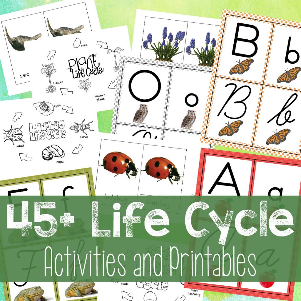 The Best Life Cycle Activities and Printables, 45+ Life Cycle Activities for Kids, Save time and make the most of teaching life cycles with these easy-to-use and ready-to-go Hands on lifecycle activities and printables. Life Cycle activities for preschool, Life cycle of a chicken, butterfly life cycle, ladybug life cycle, Frog Life Cycle Activities, Owl Life Cycle, Plant life cycle, Sea Turtle Life Cycle, Apple Life Cycle activities, Life Cycle Worksheet, Science for Kids