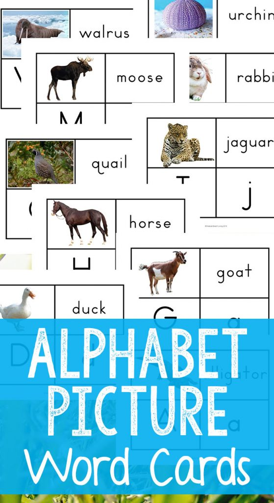 Alphabet Printable Picture Cards - Visual Word Cards, Picture Word Cards, Alphabet Flash Cards for Toddlers and Preschoolers, These Alphabet Printable Picture Cards are a great way for working on the alphabet, phonogram review, labeling, sight words, and speech with your child.