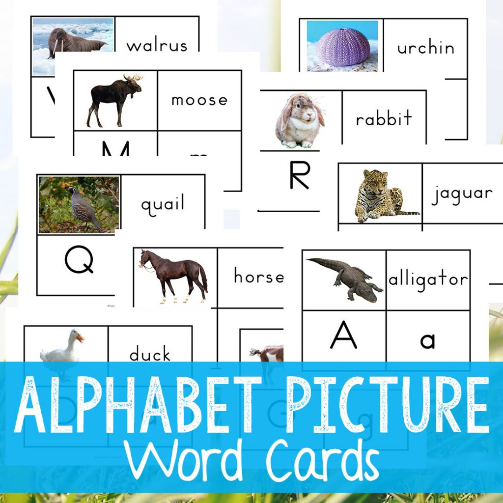 Alphabet Printable Picture Cards - Visual Word Cards, Picture Word Cards, Alphabet Flash Cards for Toddlers and Preschoolers, These Alphabet Printable Picture Cards are a great way for working on the alphabet, phonogram review, labeling, sight words, and speech with your child