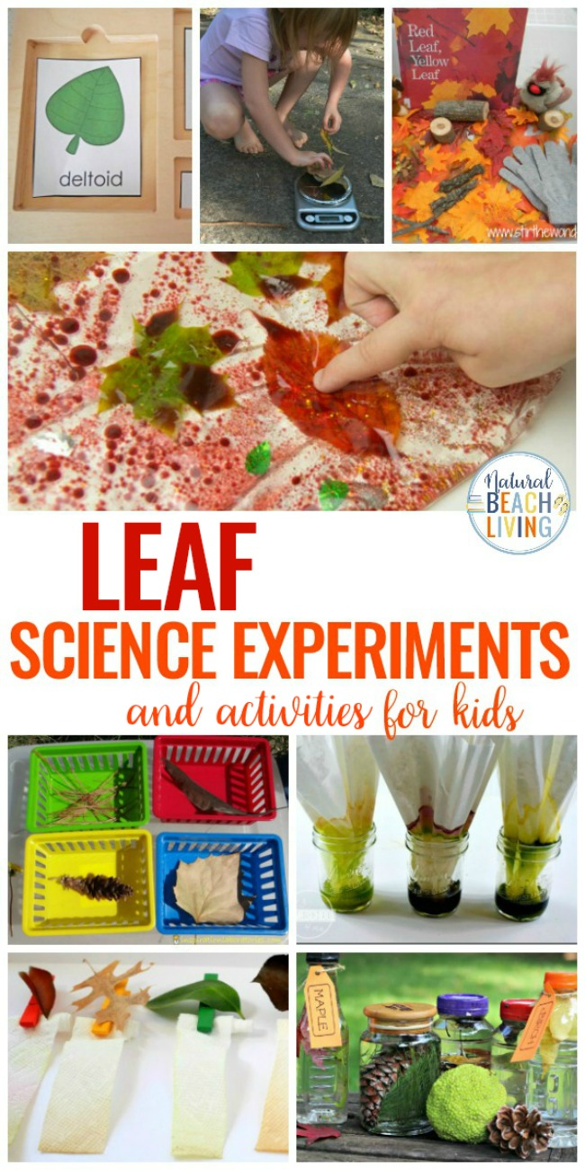25 leaf science experiments activities and sensory ideas natural 25 leaf science experiments and activities for kids plus leaf sensory play ideas and forumfinder Choice Image